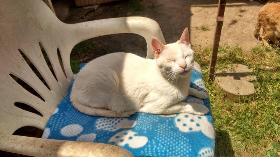 gatos en peligro de Daya Cervelló
