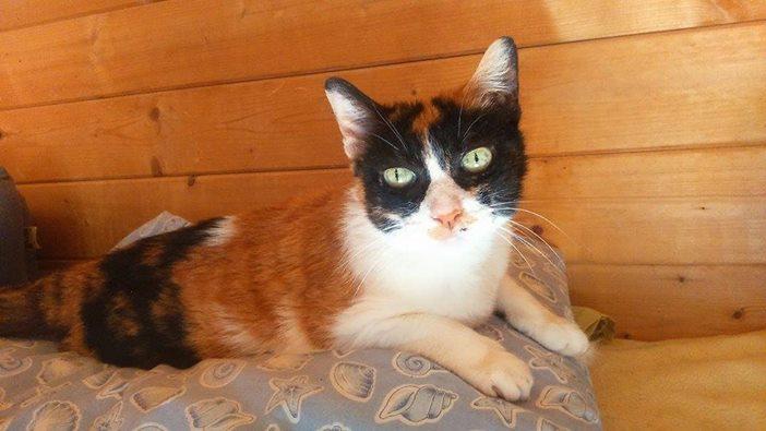 gatos en peligro, Daya Cervelló
