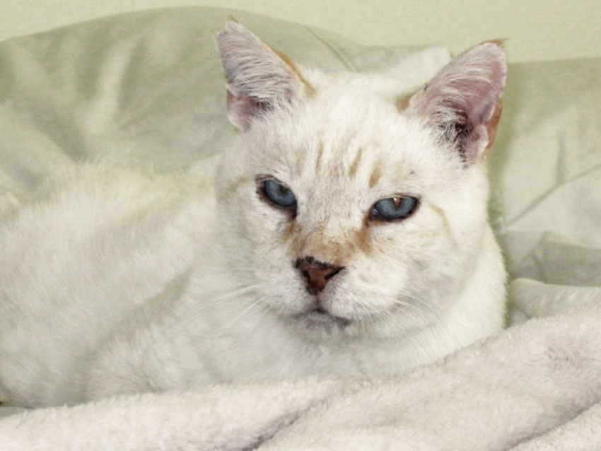 Gi, o Gigante, el gato rescatado que vive con Agnès.