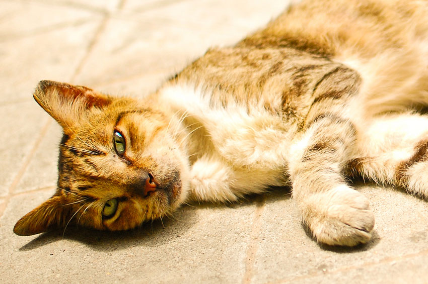 """Los gatos de Trigueros del Valle son """"ciudadanos no humanos"""", con derechos similares a sus hombres y mujeres"""