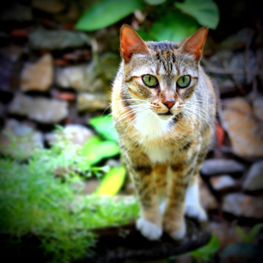 Gatos tienen derechos humanos en Trigueros