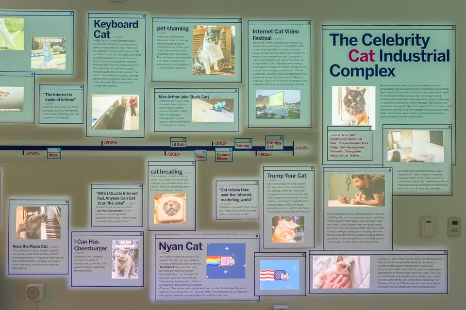 ¿Por qué los gatos son tan populares? / MoMi