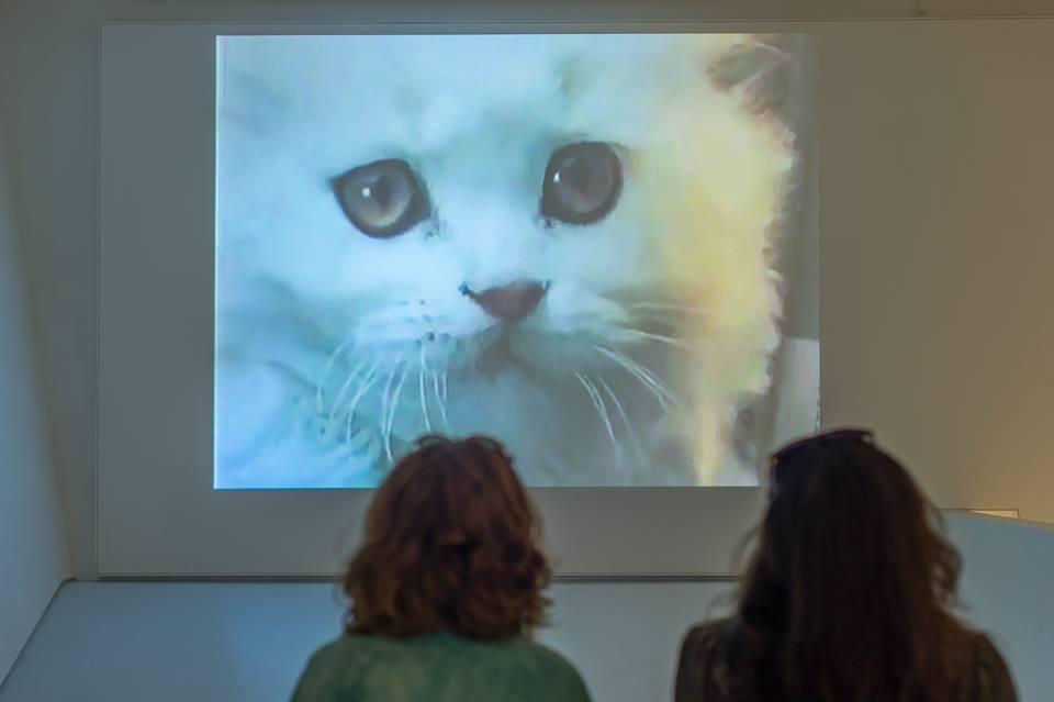 'Cómo los gatos dominaron Internet' analiza los 20 años de reinado digital de los felinos. /MoMi