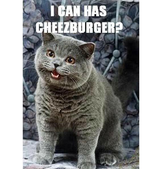 I can has cheezburger, el meme gatuno que disparó en 2007 la popularidad de los mininos en Internet