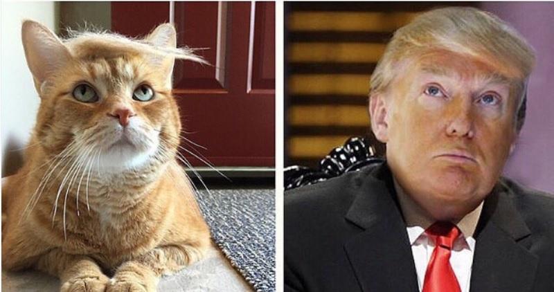 Trump your cat / @trumpyourcat