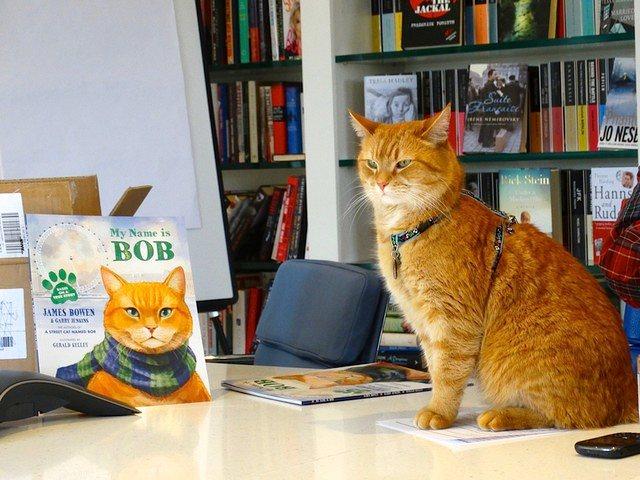 Bob en su oficina