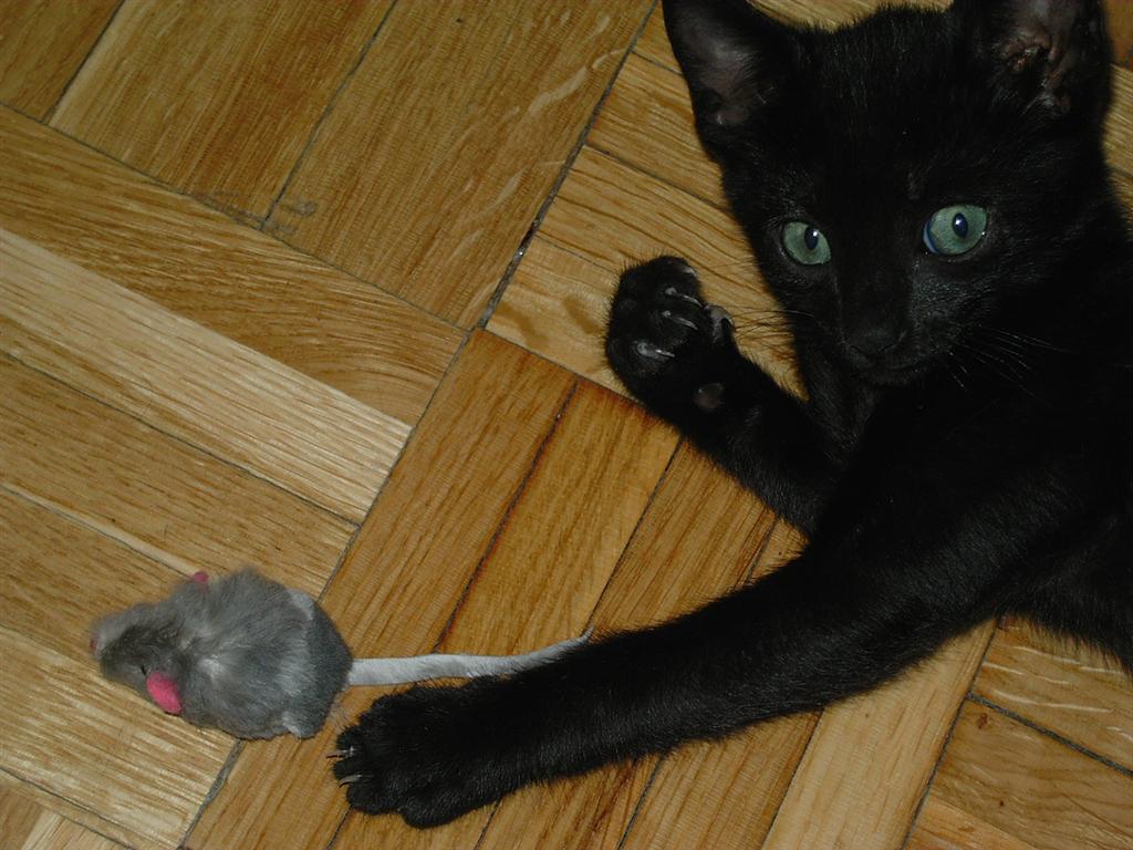 espido-freire-entrevista-gatos-3