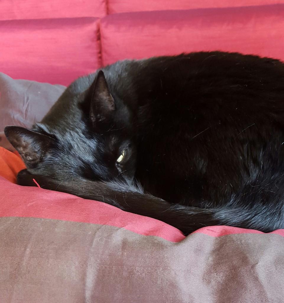 espido-freire-entrevista-gatos-7