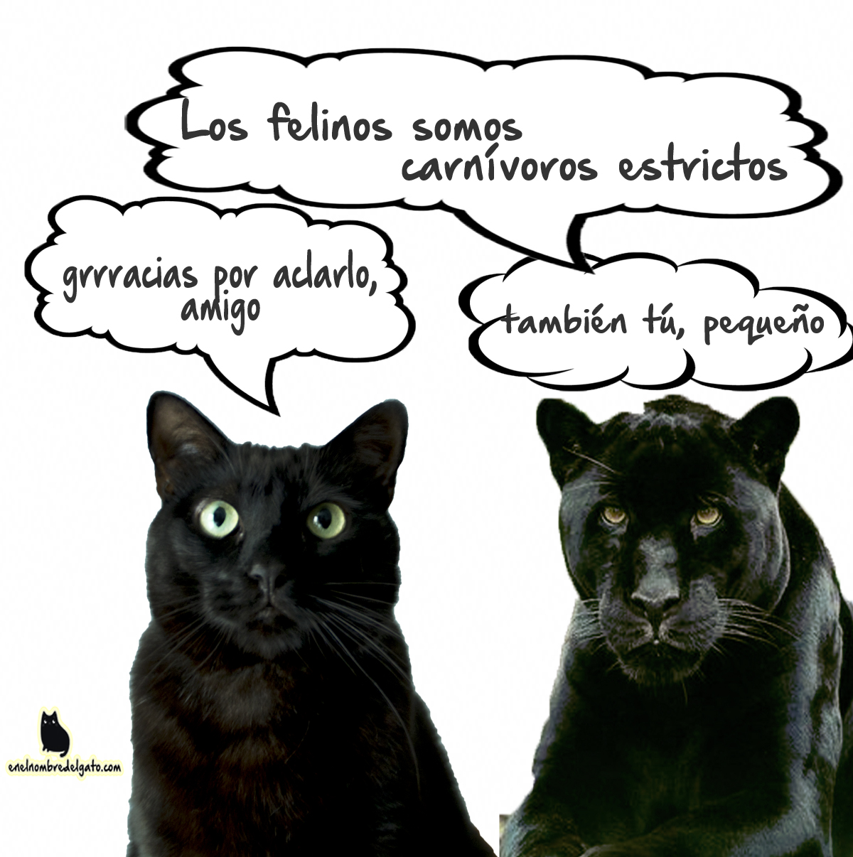 Vivir con un gato negro es como vivir con una pequeña pantera. ¡En tantos sentidos! Purrrrr