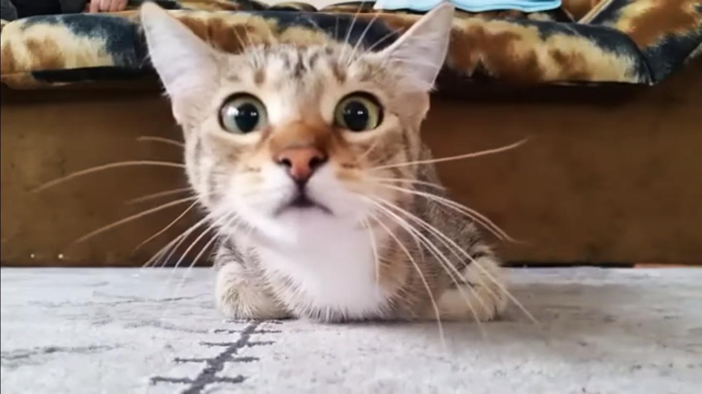gato-ve-pelicula-miedo