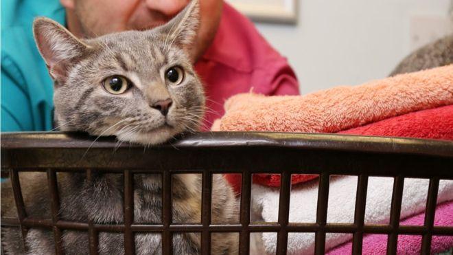 Bobby, gato sobrevive a la lavadora