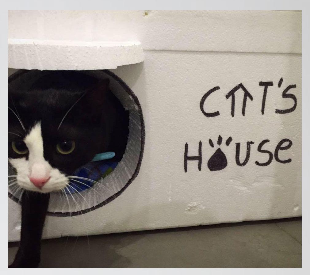 cats-house-casas-gatos-calle-21