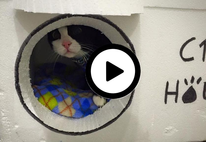 cats-house-casas-gatos-video-tutorial