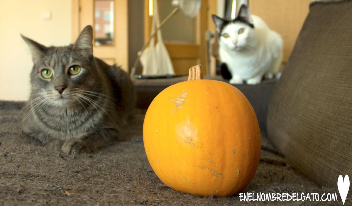 gatos-calabaza-beneficios-trucos