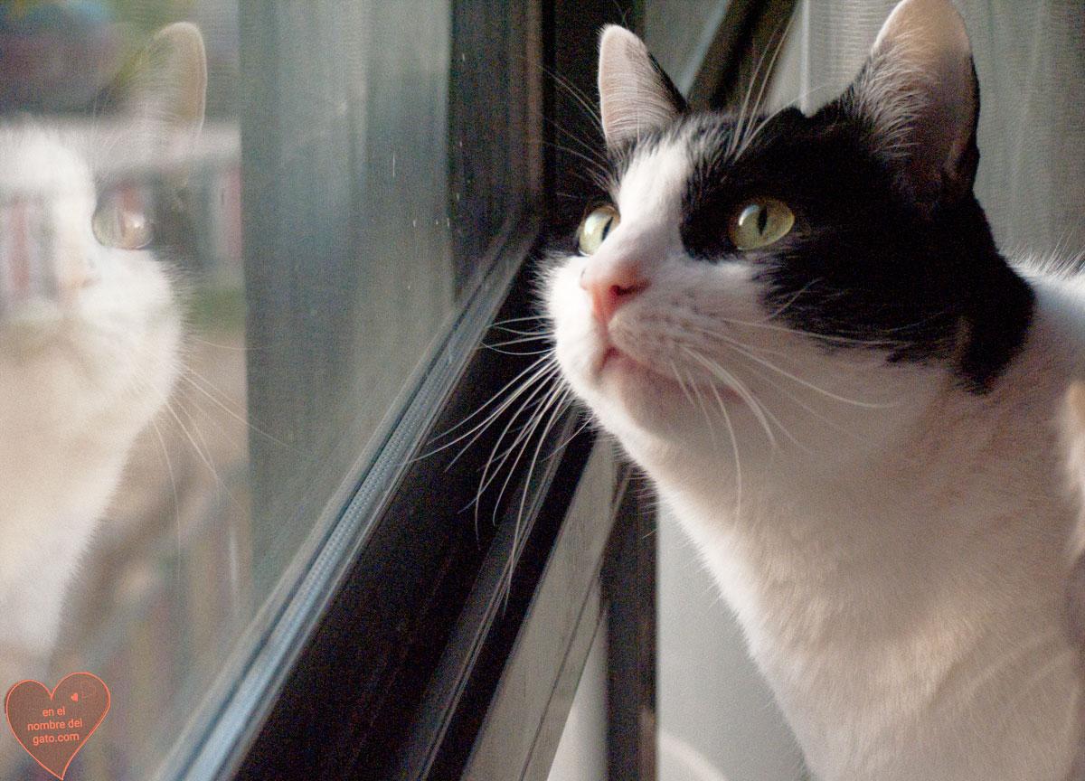 gatos ventanas