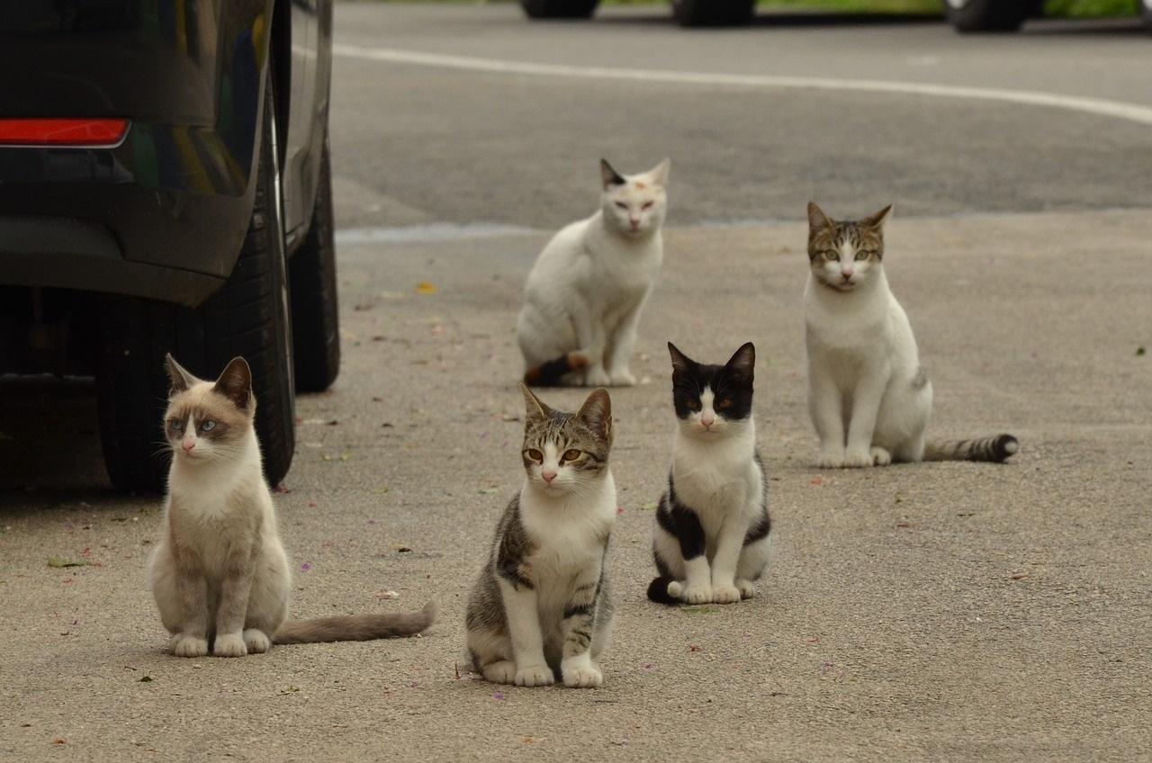 cat-1543541_1280