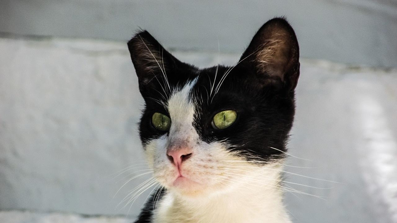 qué es el CES, gestión de colonias de gatos