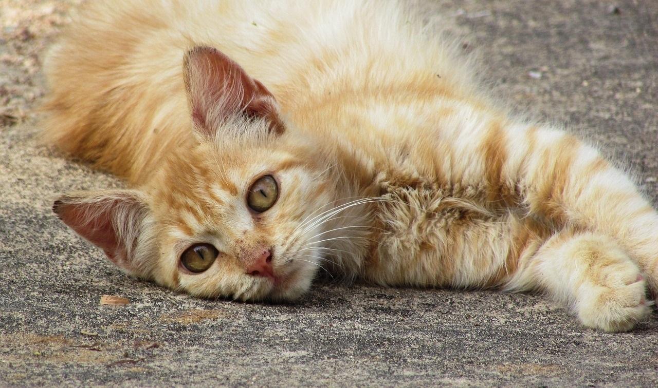 cat-1688109_1280