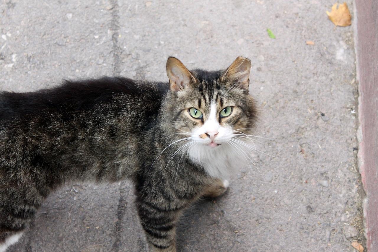 cat-777670_1280