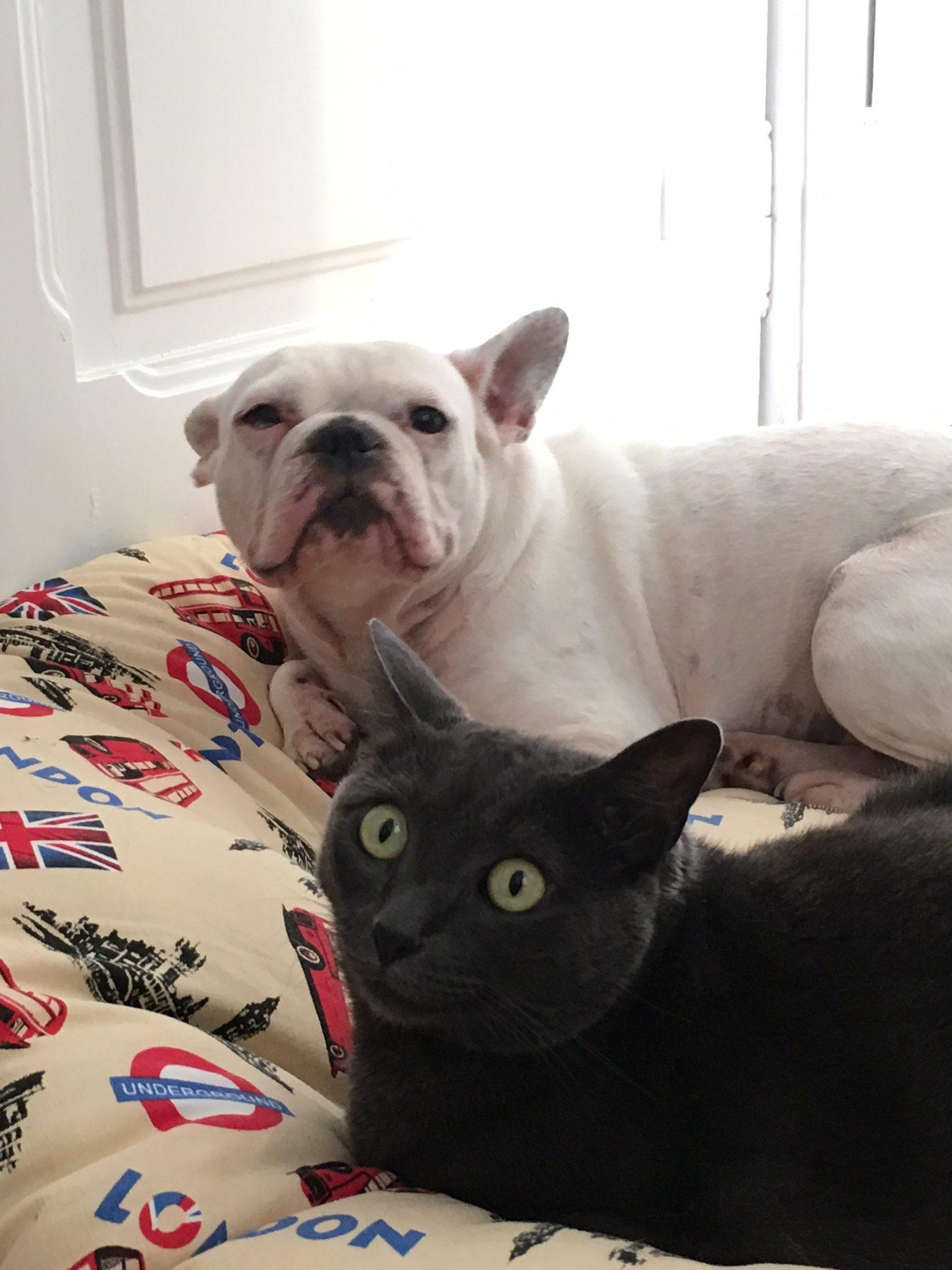 Inox y Violeta, perro y gato de Harry Eckman
