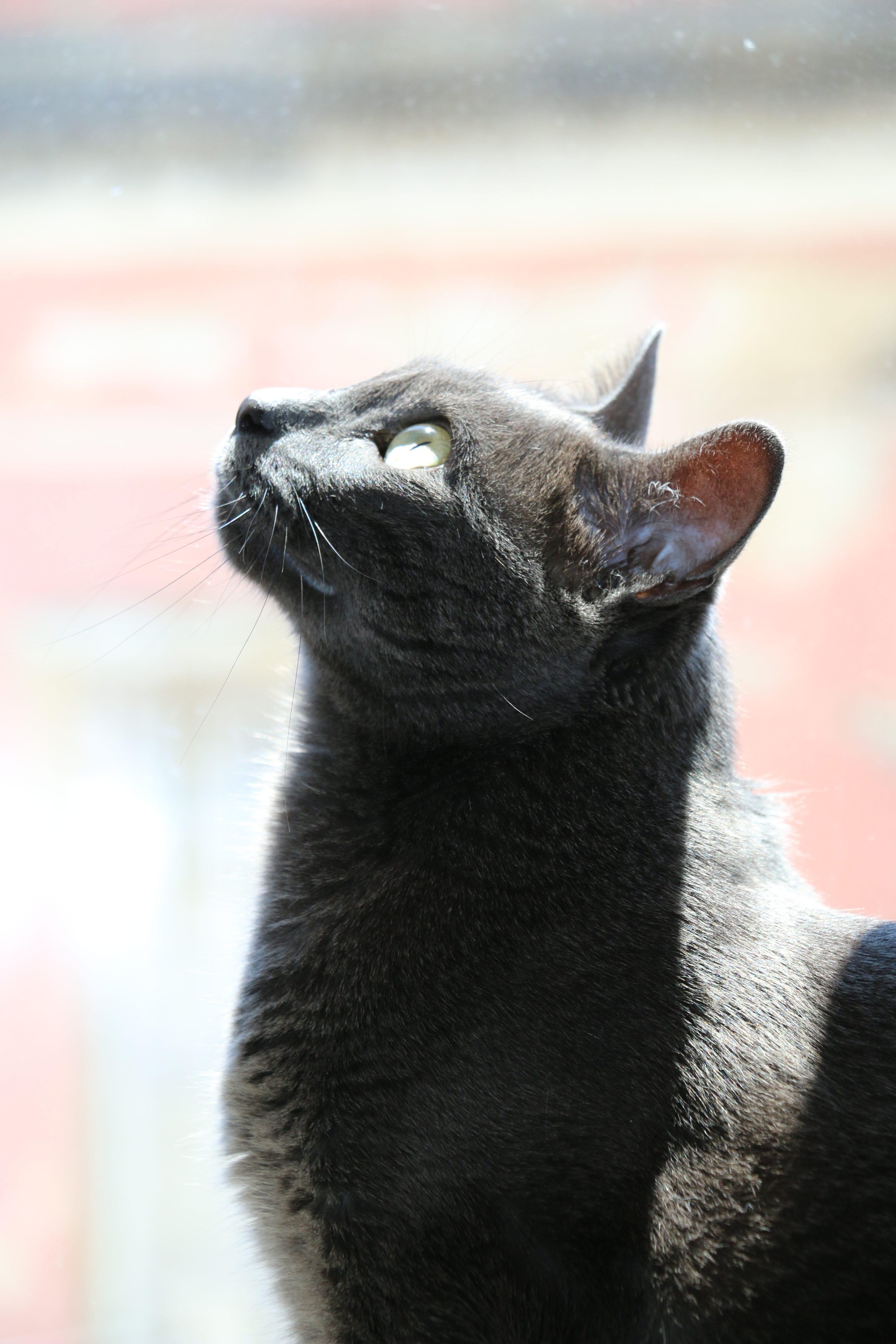 Inox, el gato de Harry Eckman