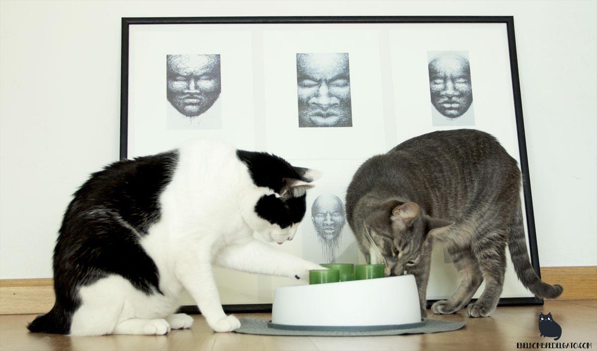 puzles de comida para gatos