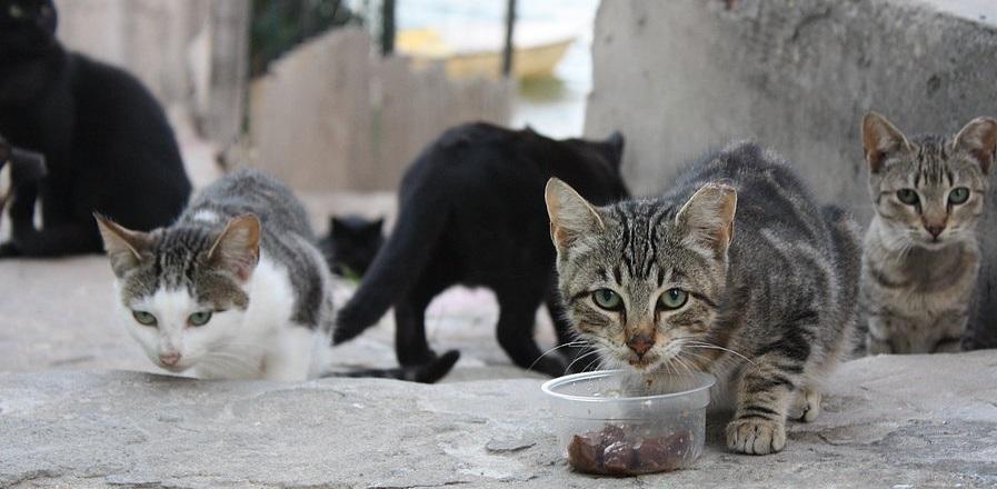 gatos-praia-faro-portugal-4