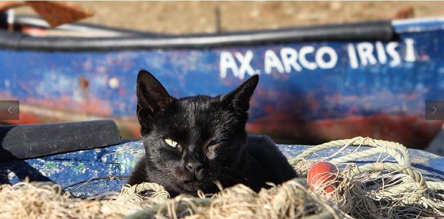 gatos-praia-faro-portugal-5