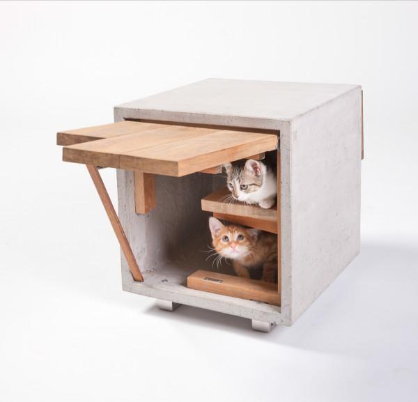 casas gatos calle arquitectos