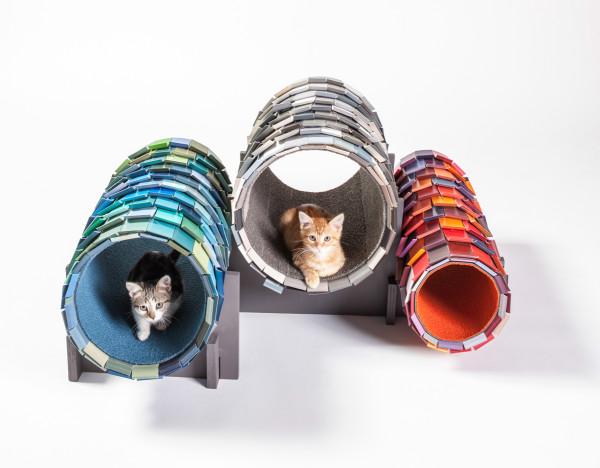 casas gatos calle