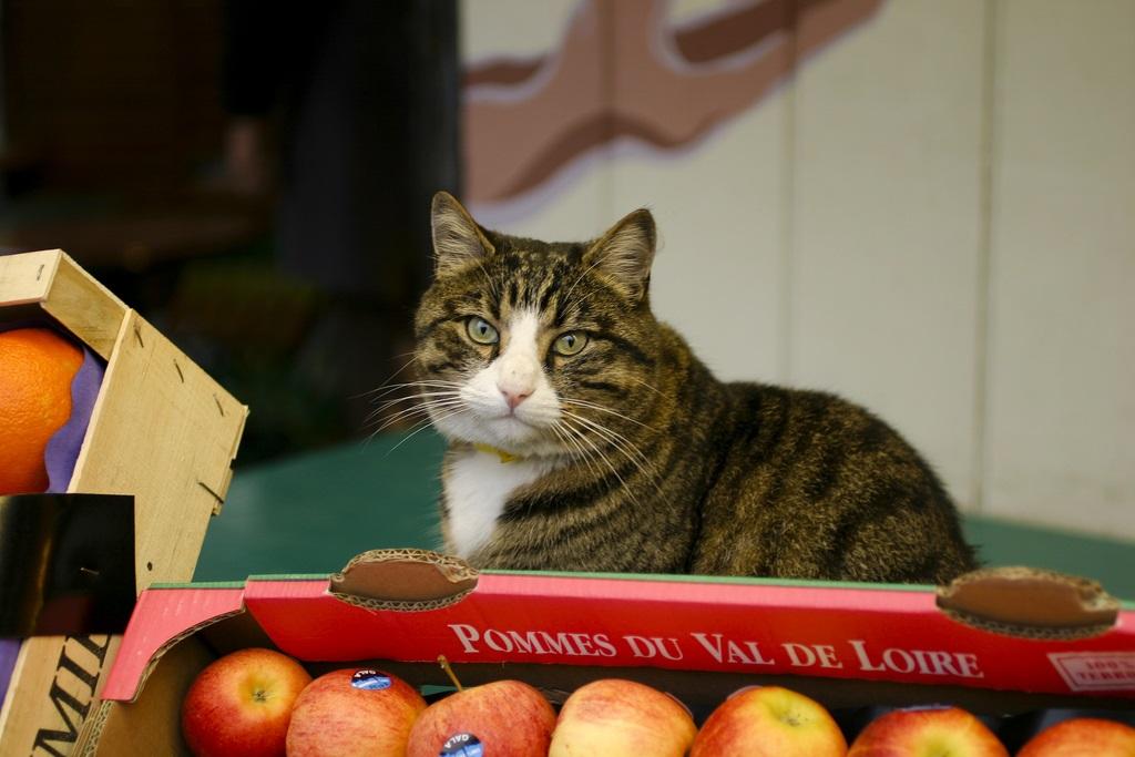gatos frutas manzanas
