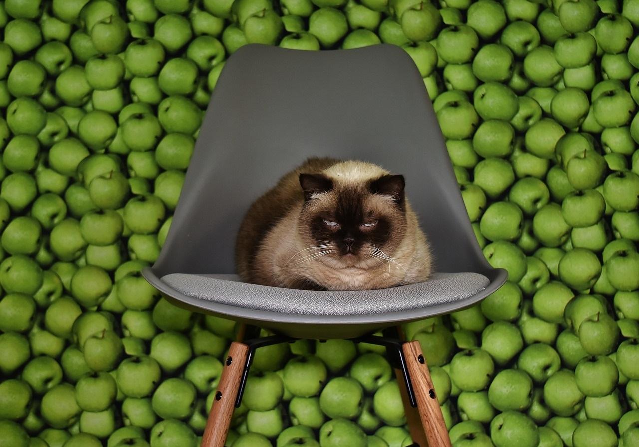 Alimentos T Xicos Para Gatos Archivos En El Nombre Del Gato # Muebles Toxicos