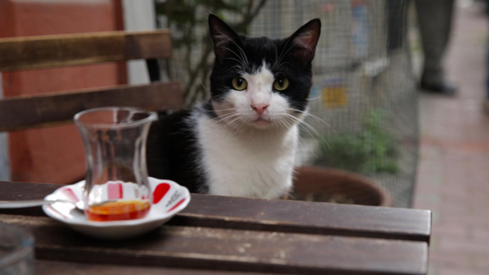 kedi - película de los gatos de estambul