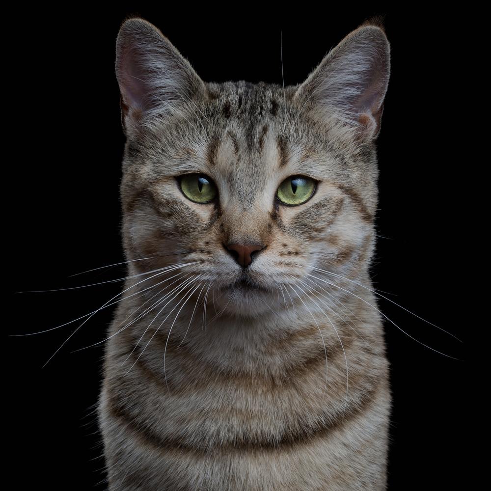 alma-animal-robert-bahou-12