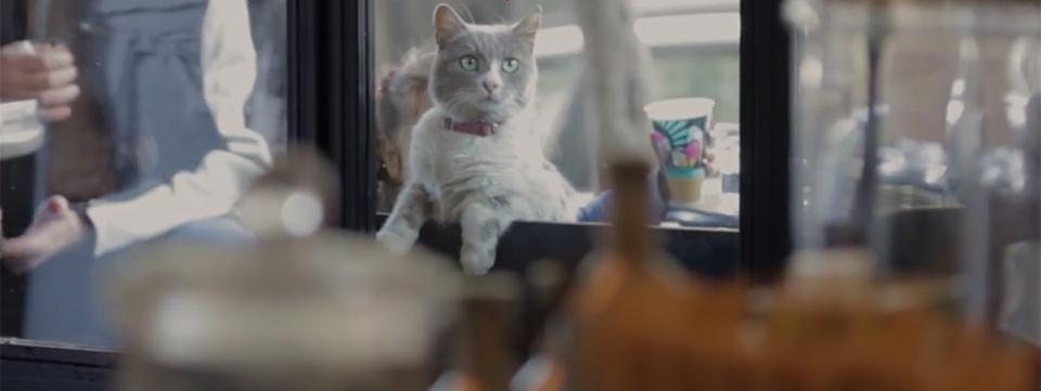 Kedi, documental gatos Turquía